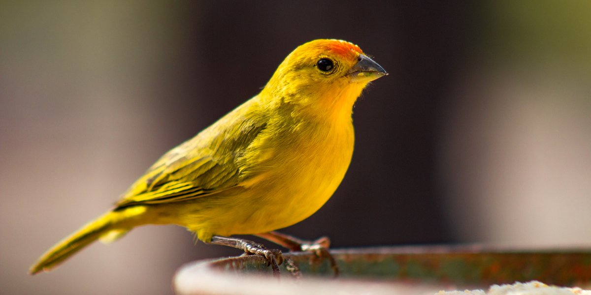 Is oil the canary in the gold mine?